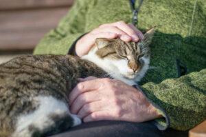 ペットにも介護が必要と知って早や10年。。。ペット介護の今と昔